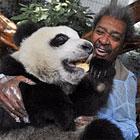 Дон Кинг: «Если мы будем работать, как панды…»