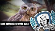 ВИДЕО. Ультрас Динамо нарисовали граффити в поддержку пятнистых сов