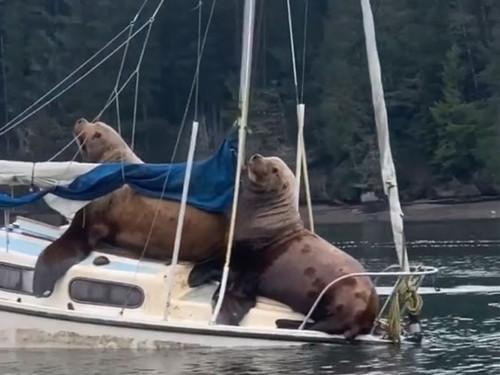 ВИДЕО. У американского футболиста два морских льва угнали лодку