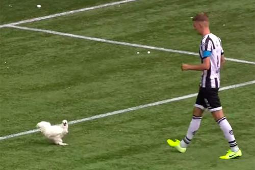В Нидерландах во время матча на поле выбежала курица
