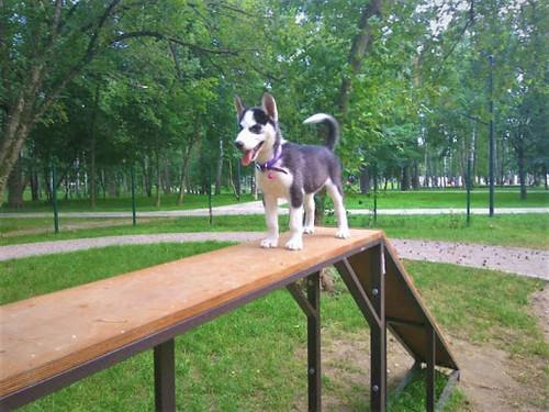 КАРИКАТУРА. Як погуляти в парку чи біля озера, якщо немає собаки