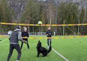 ВІДЕО. Феноменальна гра. Норвежець навчив свого собаку грати в волейбол
