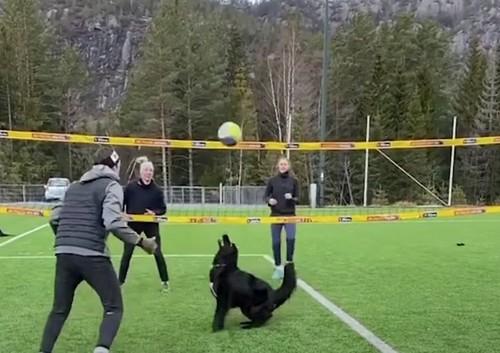 ВИДЕО. Феноменальная игра. Норвежец научил свою собаку играть в волейбол