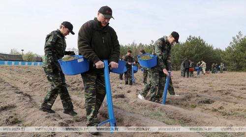 В Беларуси суботник. Лукашенко сажает деревья в Чернобыльской зоне