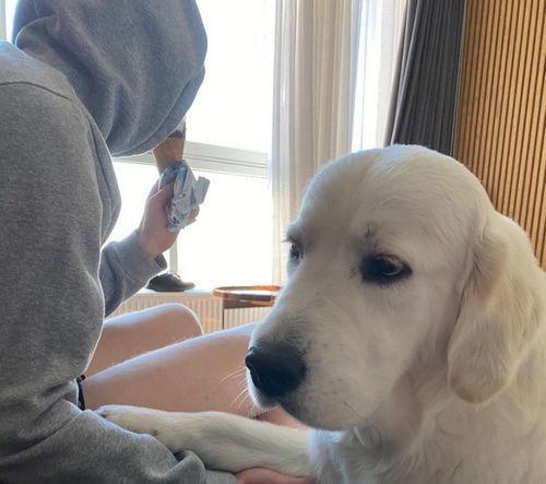 ВИДЕО. Цыганков не поделился мороженым со своей собакой