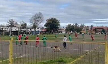 ВИДЕО. В Чили на поле выбежал пес и забил гол. Возьмите его в сборную