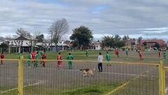 ВІДЕО. У Чилі на поле вибіг пес та забив гол. Візьміть його у збірну
