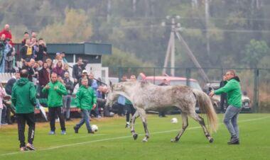ВІДЕО. Собаками не здивуєш. Кінь вибіг на поле у грі України та Італії