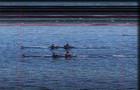 Четыре украинских экипажа выступят в финале «А» на ЧМ