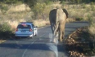 Слон мешает сборной США