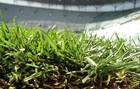 На стадионе во Вроцлаве уложен газон+ФОТО