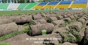 Карпаты распродадут газон стадиона Украина