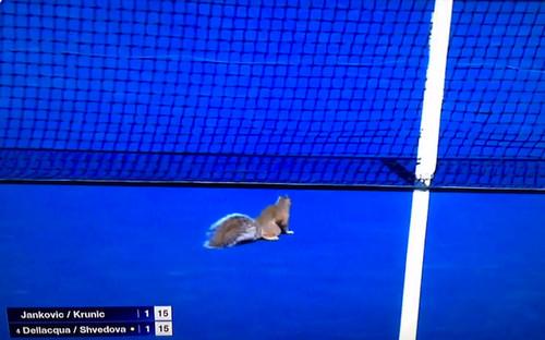 Белка едва не сорвала теннисный матч на US Open