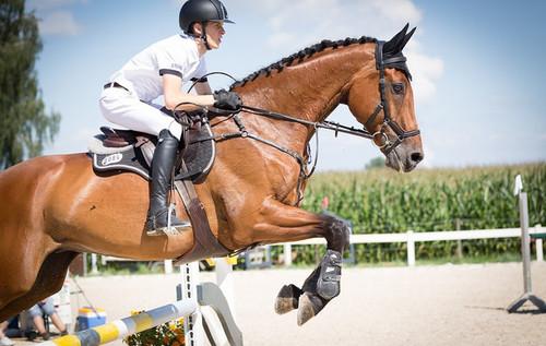 Cоревнования по конкуру Flying Horse Cup. LIVE трансляция