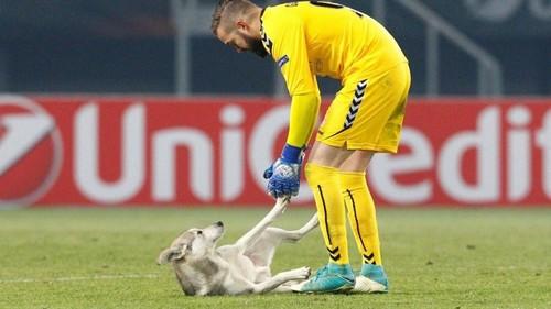 ВИДЕО ДНЯ. Собаки тоже хотят играть в Лиге Европы