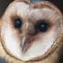 Buddha for Owl